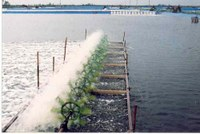 The Residues Monitoring Program for Certain Harmful Substances in aquaculture fish and products